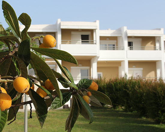 hotels in halkidiki greece - Skion Palace Beach Hotel